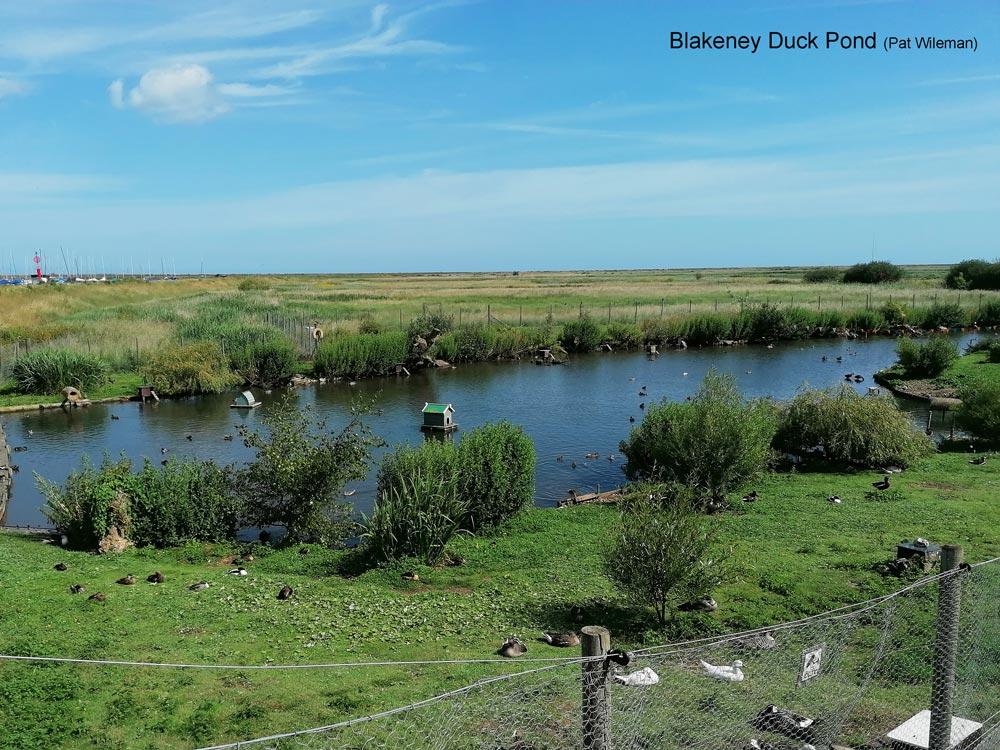 Blakeney-Duck-Pond-101931-edit