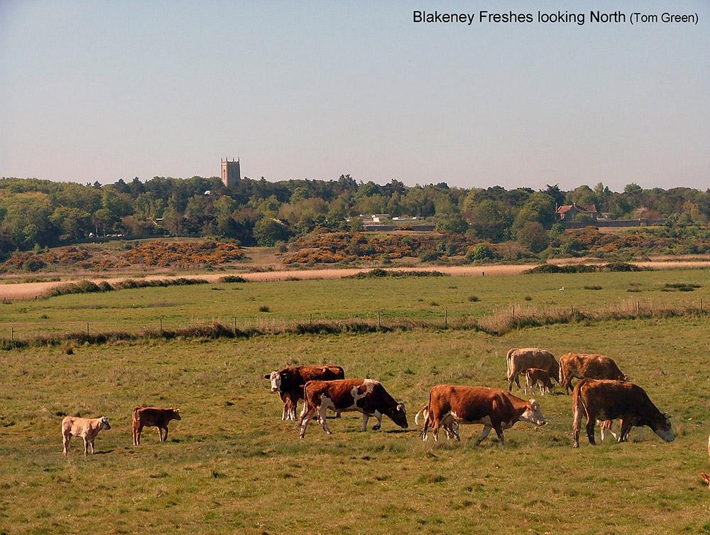 Blakeney Freshes & Friary Hills