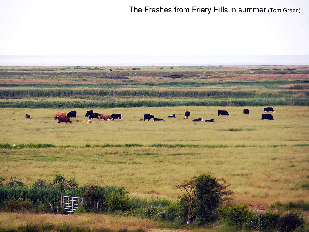 Blakeney-Freshes-from-Friary-Hills