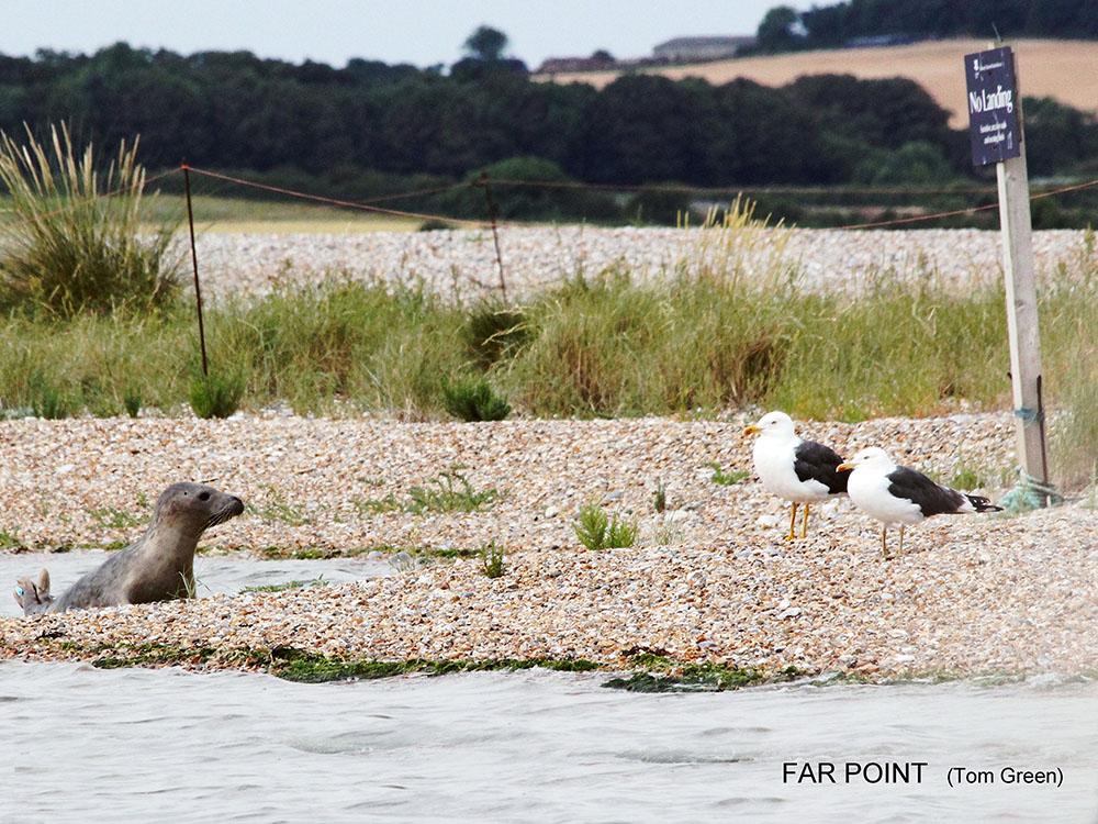 Blakeney Point - Far Point