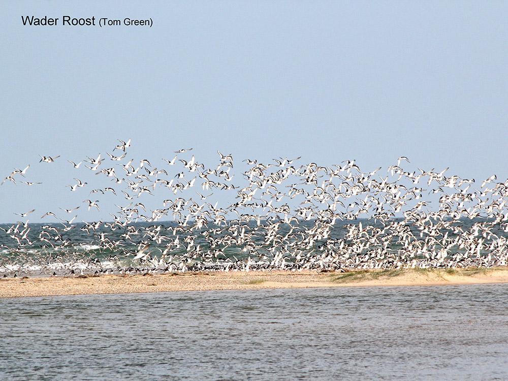 Blakeney Point - Wader Roost