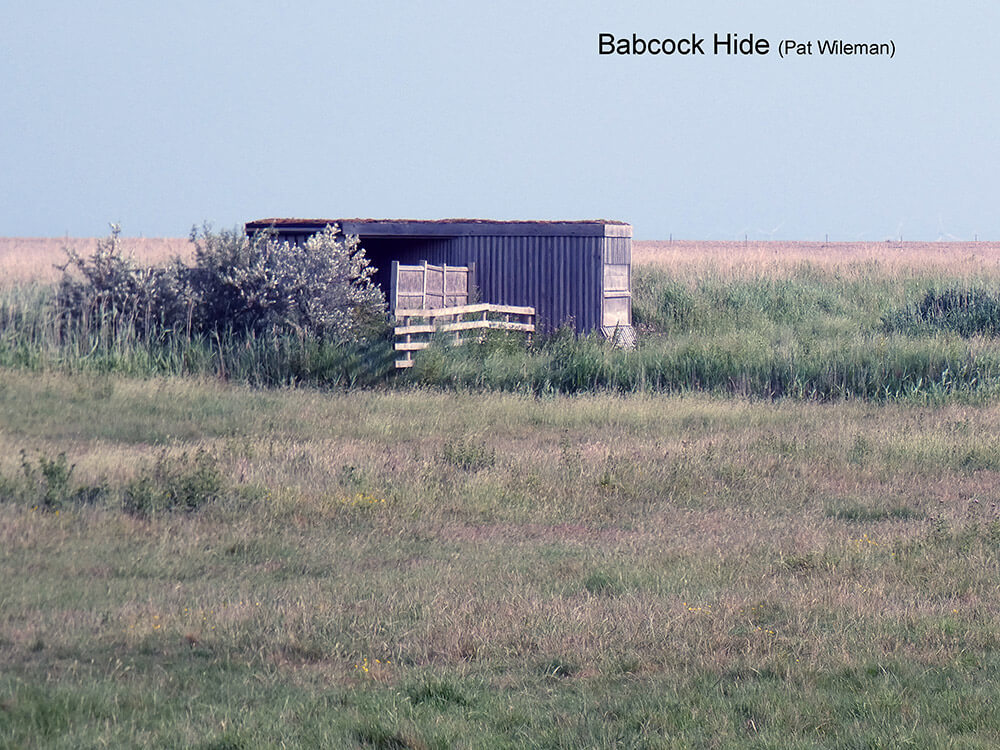 Cley-Marshes-E-Babcock-Hide-P1000867