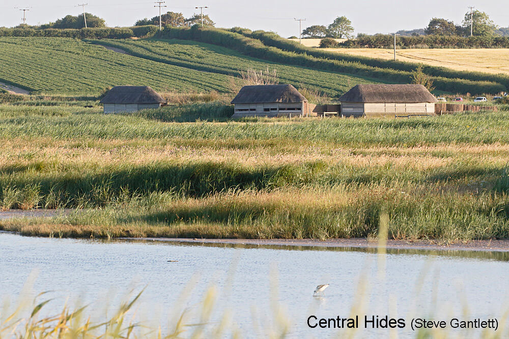 Cley-Marshes-W-Hides-22_07_2016