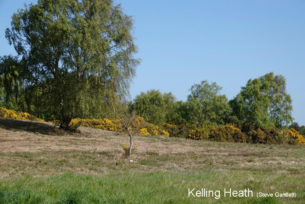 Kelling-Heath-8262-1000
