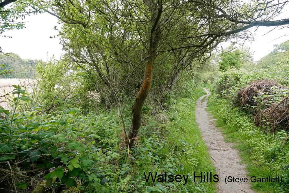 Walsey-Hills-001-27-04-2020