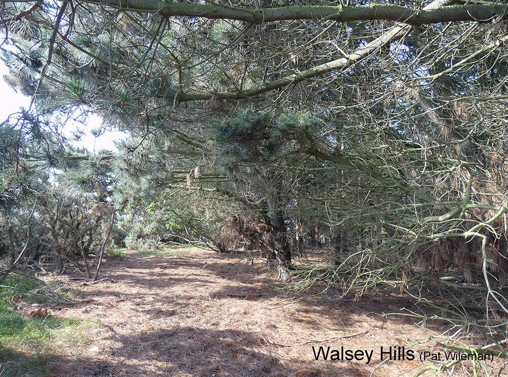 Walsey-Hills-woods-P1000804